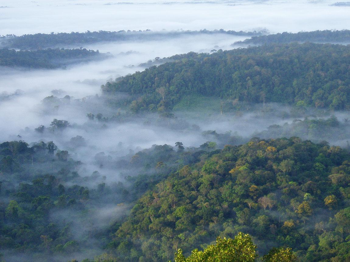 Brume sur la forêt des Nouragues