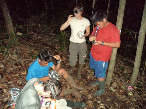 Stagiaires de 3ème, avec un garde de la réserve, et une chercheuse. Scène de nuit, lors de capture d'une nouvelle espèce d'amphibien: pristimantis sp2